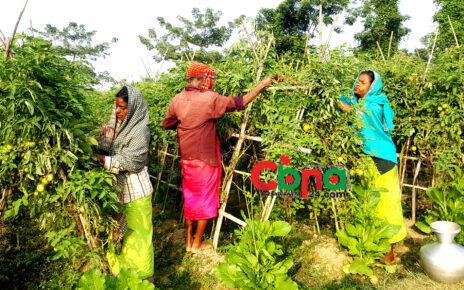 জলবায়ু পরিবর্তনে কমলগঞ্জের কৃষকদের অন্যরকম লড়াই